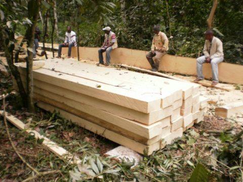 Заготовка древесины абаши